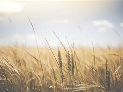 Prijzen landbouwgrond voor eerste keer in vijf jaar niet gestegen