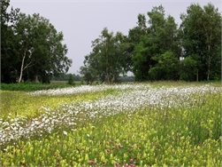 Evergem schrapt 150 hectare woonuitbreiding